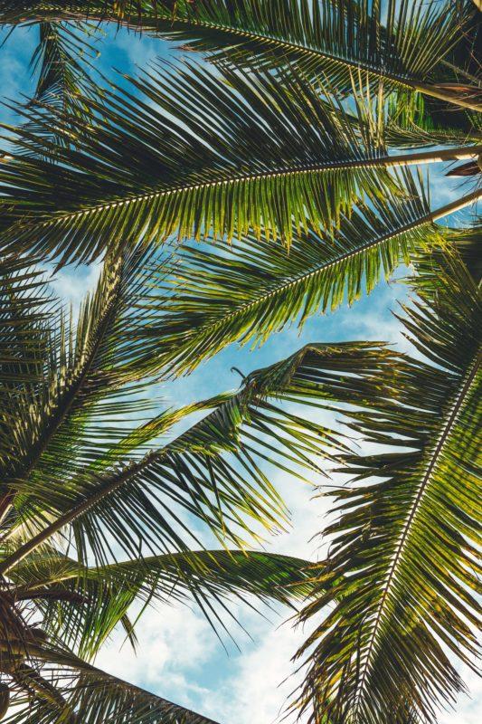 Company Profile The Palm Tree House Bali Retreat